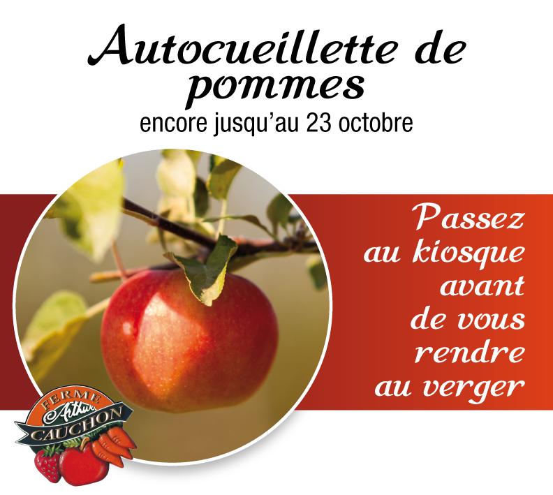 autocueillette-pommes